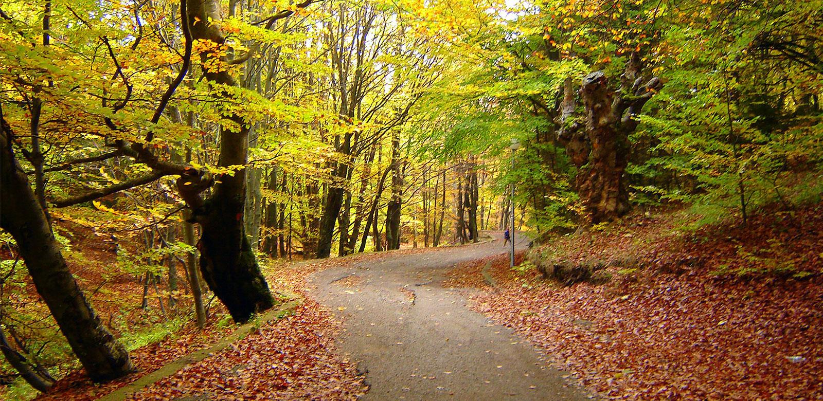 bg-automne