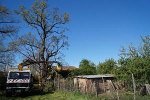 elagage-abattage-arbres-carsalade-elagage-01