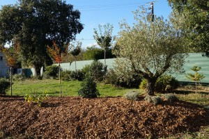 plaquettes-forestieres08